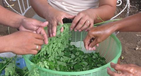 Moringa, A Nutritious Superfood