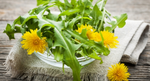 Why The French Love Dandelions
