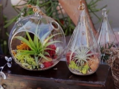 Air Plant Terrariums & Tillandsia Care
