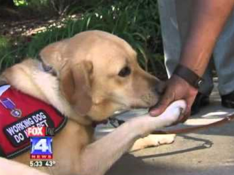 Service Dog Helps Veteran with PTSD