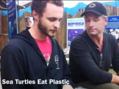Plastic in Sea Turtles
