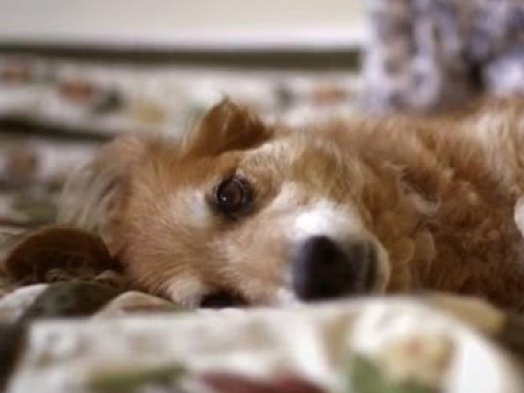 Dogs Can Smell Cancer – Secret Life of Dogs