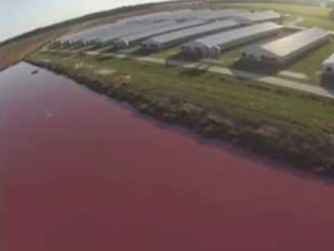 Spy Drones Expose Smithfield Foods Factory Farms