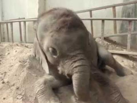 Baby Elephant, Moyo