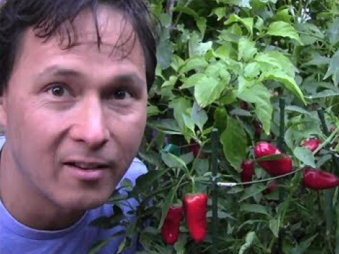 10 Reasons Why You Should Grow More Peppers