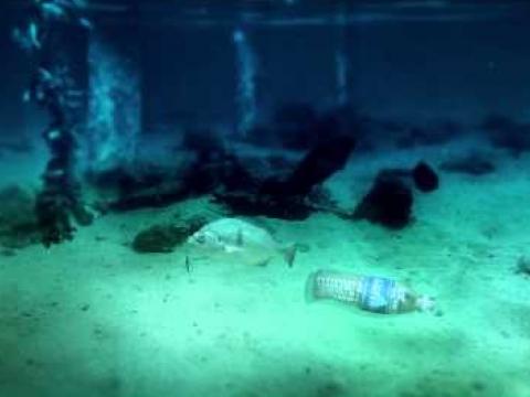 A Bottle's Odyssey