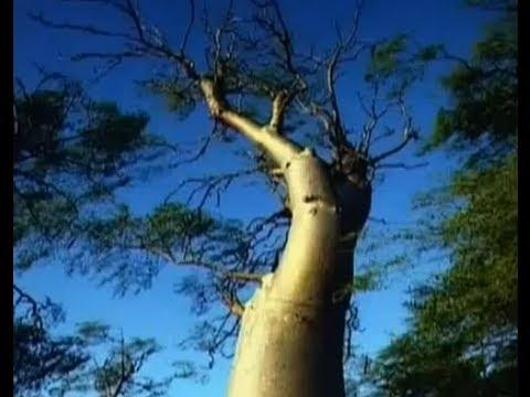 Moringa Oleifera – MORINGA MEDICINE