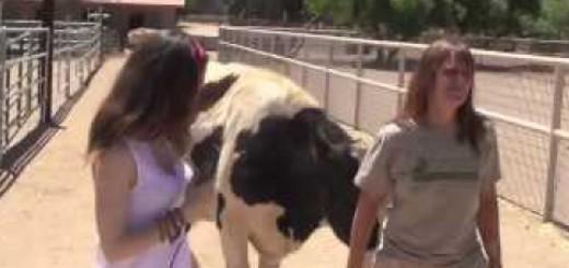 Meet the Animals at Farm Sanctuary