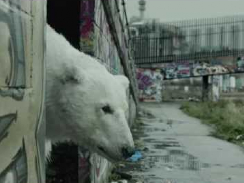 A Homeless Polar Bear