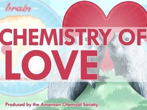 The Chemistry of Love – Reactions