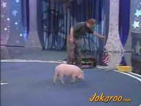 Pet Star: Smart Pig