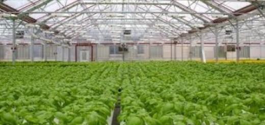 Gotham Greens Rooftop Farming