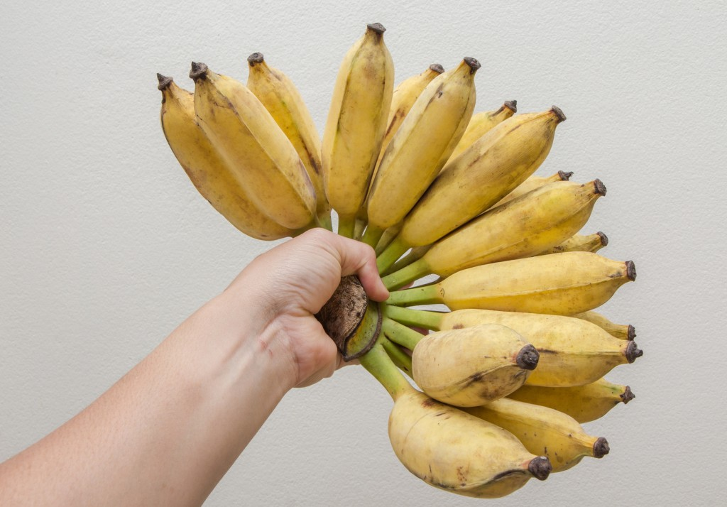 Nam Wah bananas in his hand on a wall background