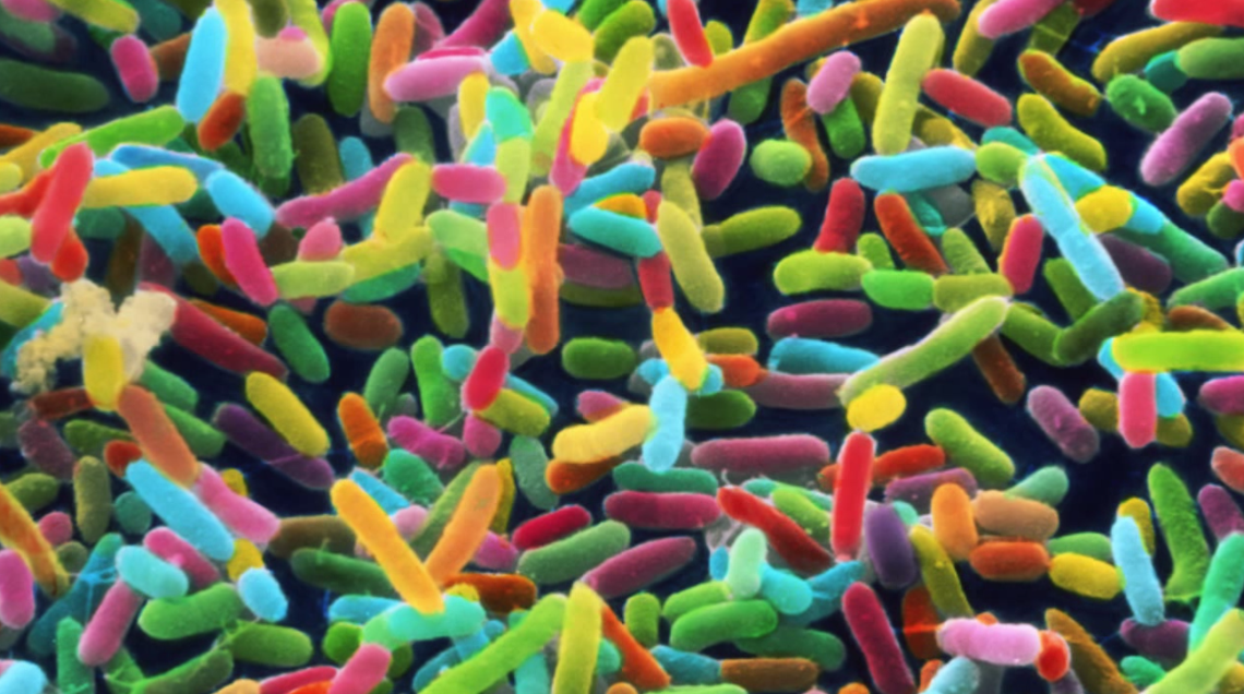 VIDEO: The 4 Most Amazing Things About Your Gut Biome