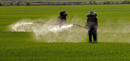 EWG Releases Dirty Dozen List of Cancer-Causing Chemicals