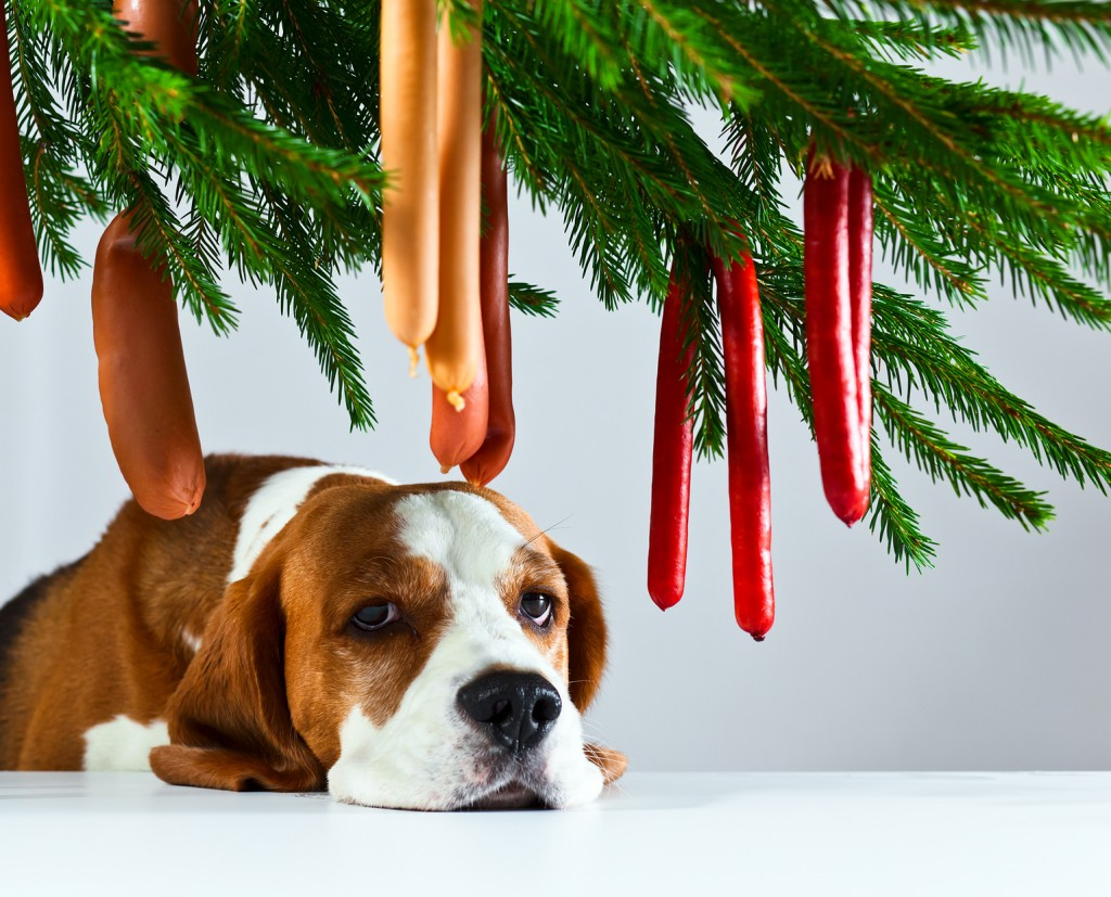 The cute hound and its Christmas dreams