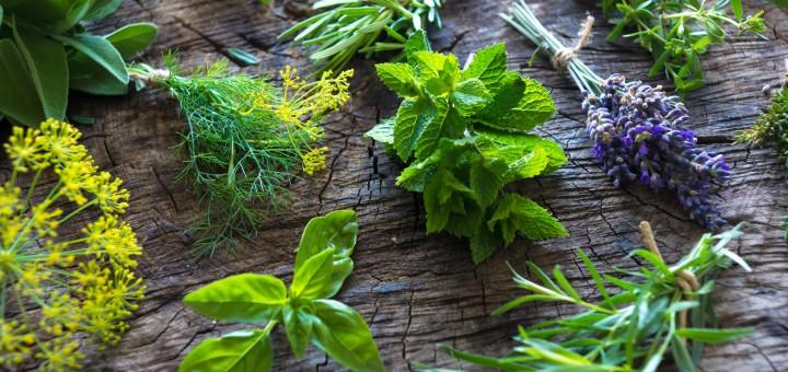 Fresh herbs on wooden background