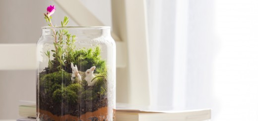 Try This Simple DIY Terrarium To Bring Nature Inside