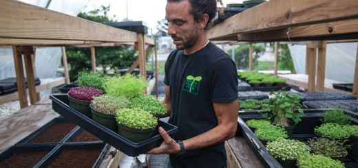 Micro Greens=Mega Nutrition: Your Guide to Growing Microgreens