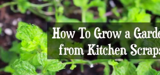 Grow Produce From Kitchen Scraps