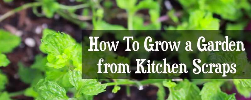 growing-a-garden