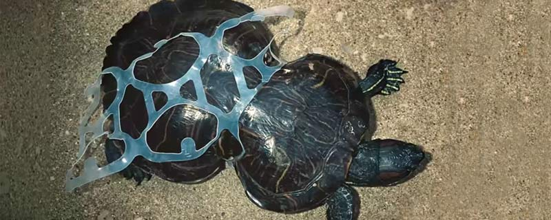 turtle-plastic-ring