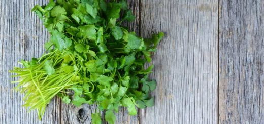 You'll Regret Not Knowing Cilantro's Health Benefits Sooner
