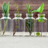 herbs-in-jars
