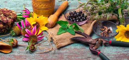 The Benefits Of Herbs & Why You Need Them In Your Life