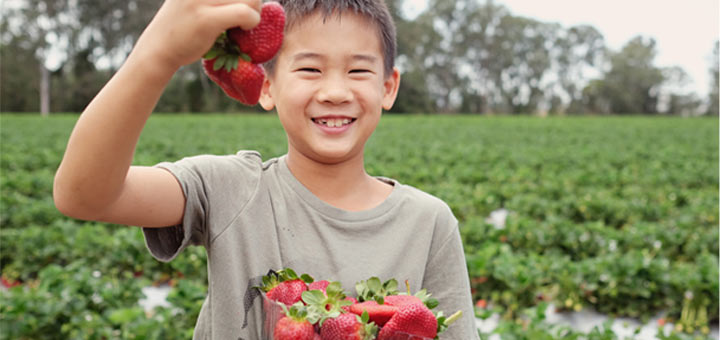 boy-holding-strawberries