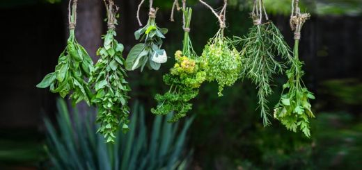 How To Dry Herbs To Preserve Them