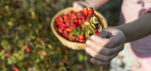 5 Amazing Benefits of Rose Hips