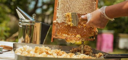 raw-honey-scraping