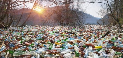 plastic-bottle-waste