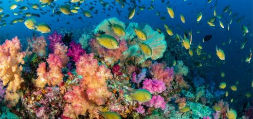 colorful-coral-reef
