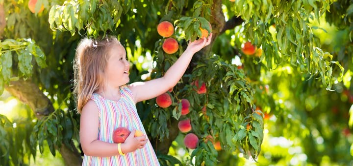 little-girl-picking-peach