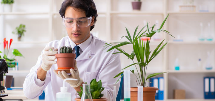 New Biodegradable Plastics Are Made From Cactus