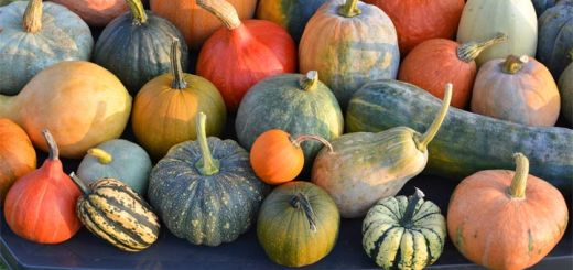 winter-squash-varieties