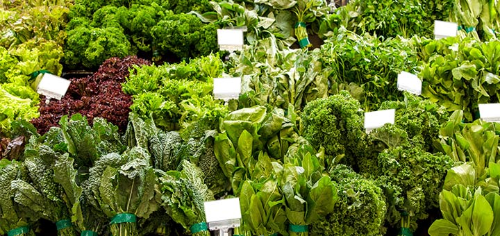 The Best Lettuces To Add To Your Salad Bowl