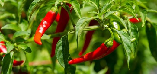 8 Important Health Benefits Of Cayenne Pepper