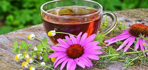 5 Benefits Of Echinacea: From Combatting Cancer To Immune Support