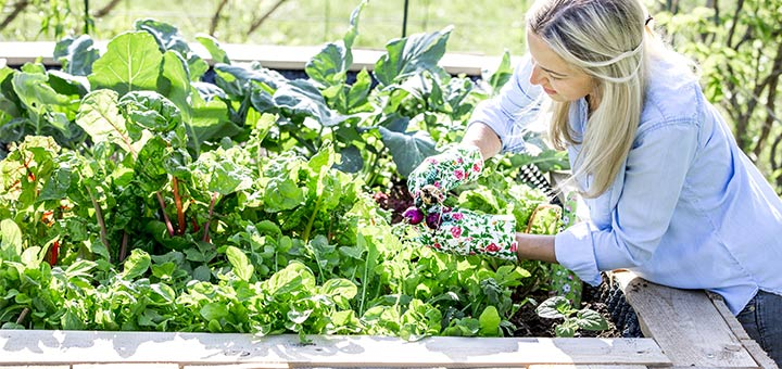 Get Your Hands Dirty And Start Gardening To Improve Your Mental Health