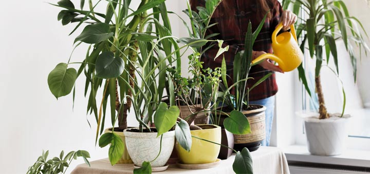 6 Natural Ways To Clean The Air In Your Home