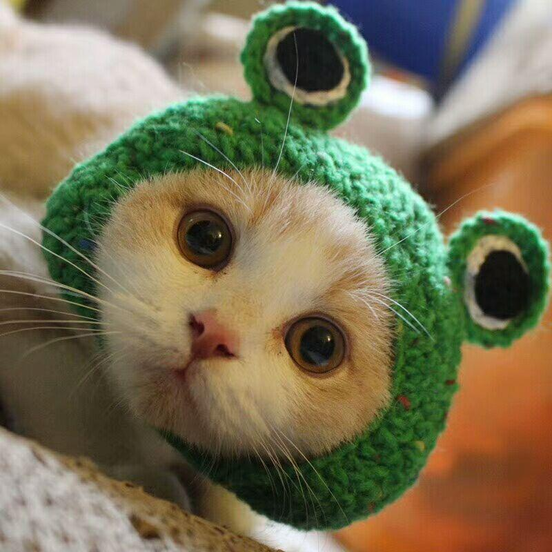 Knitted Wool Frog Pet Hat