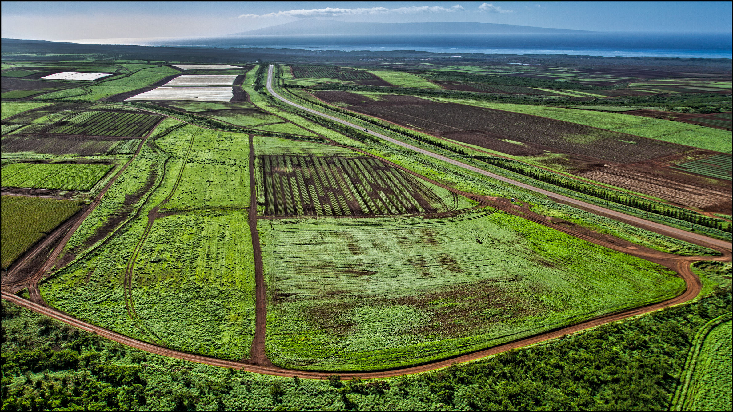 A High-Stakes Initiative Could Ban GMO Farming in Maui County
