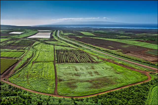 Monsanto fields on Molokai. The island of Lanai is seen in the background.