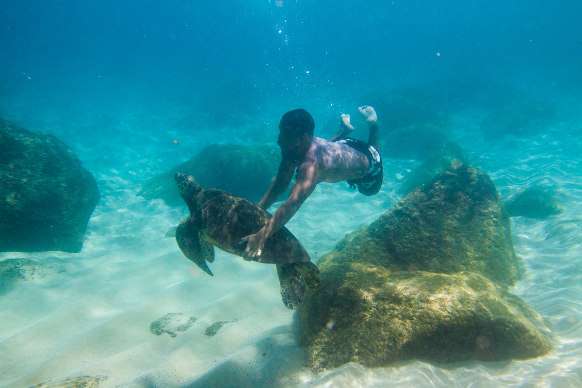Respect the Locals: Sea Turtle Selfies Are Uncool — and Illegal