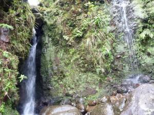 Sierra Club Endorses Hanabusa, Hirono, Gabbard