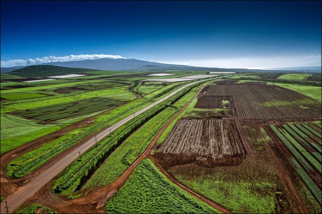 GMO fields on Molokai (NO TEXT)