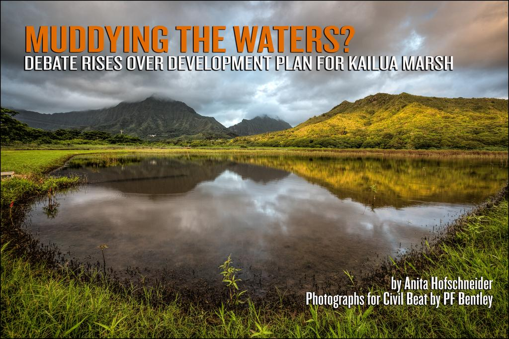Debate Rises Over Development Plan for Kailua Marsh